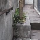 付け替えたウッドデッキ。階段の奥行きも広めなので昇り降りが楽になりました。