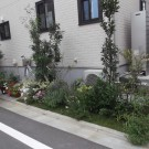 before:玄関横花壇、別方向から。植栽が綺麗ですが育ちすぎて敷地からはみ出しています。