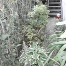 before:庭の全景