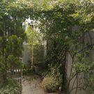 before:玄関側のデッキ入り口。つるバラが育ちすぎています。