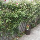 before:剪定前の花壇。土留が無いので、デッキの上に下草類が乗り上げています。