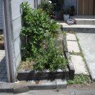 before:玄関前花壇