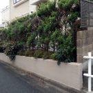 before:隣地側の生垣