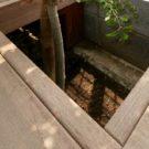 デッキ床をくり抜いた植栽スペース