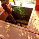 デッキ床をくり抜いた植栽部分
