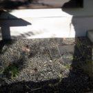 before:既存縁側と散水栓