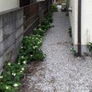 before:建物脇