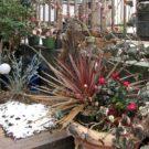 before:隣地側の花壇