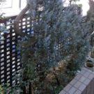 隣地側につけたフェンス