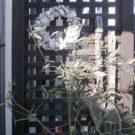 建物脇の目隠しフェンス