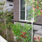 before:玄関正面から見た庭