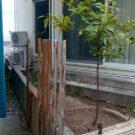 before:フェンス撤去後 道路から庭を見る