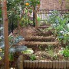 before:庭奥から見る