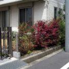 before:隣地側から庭方向を見る