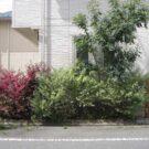 before:道路から庭方向を見る